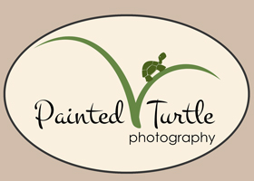 Painted Turtle Photography