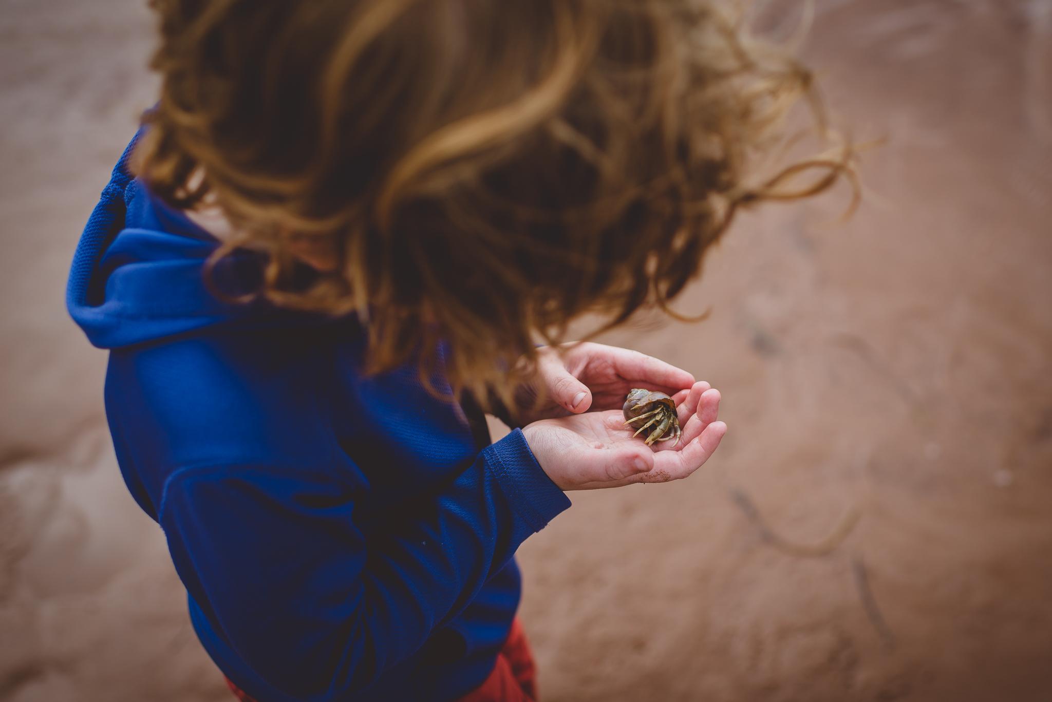 child's hands holding hermit crab